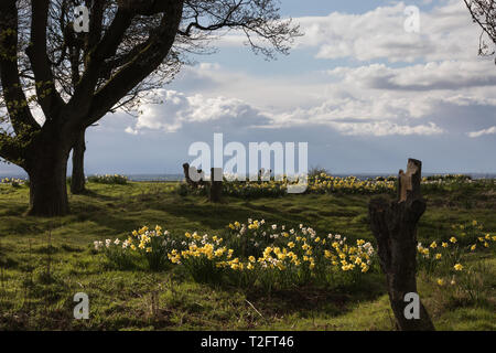Chiltern Downs, UK. 2nd April, 2019. UK Weather, changeable weather over the Chiltern Downs Credit: amanda rose/Alamy Live News - Stock Image