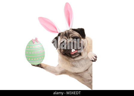 Happy Easter bunny pug dog with bunny teeth and pastel green easter egg, isolated on white background - Stock Image