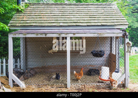 Chicken coop with cedar shingles roof in residential backyard in early summer - Stock Image