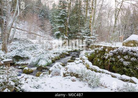 Small stream in 'Parc Naturel Regional de Millevaches en Limousin' during winter - Stock Image