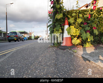 Traffic Cone on a Pavement - Braintree, Essex - Stock Image