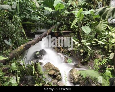 Stream trickling through dense green vegetation. - Stock Image