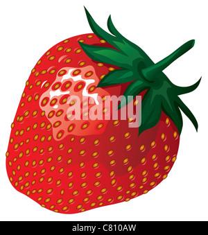 strawberry vector illustration isolated on white background - Stock Image