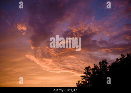 Dramatic sky with orange clouds at sunset and tree silhouette - Stock Image