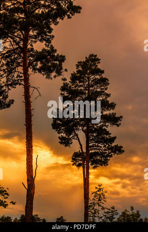 Stunning colorful sunset in Yellowstone National Park Wyoming in late spring. Pine-forested landscape in silhouette. - Stock Image