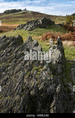 View looking towards the Old John folly, Bradgate Park, Leicestershire, England UK - Stock Image