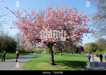 Regent's Park on a sunny day. - Stock Image
