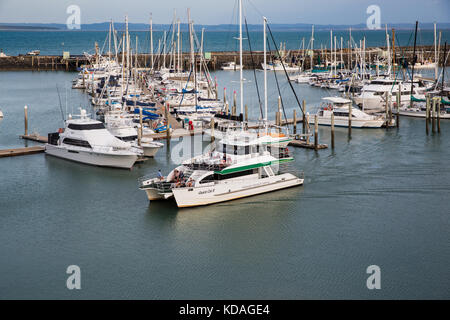 A whale watching tourism boat returns to the Hervey Bay Marina, Queensland, Australia - Stock Image