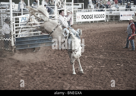 Rodeo cowboy member of PRCA trying to balance himself on horse in Smalltown Bridgeport, Texas, USA - Stock Image