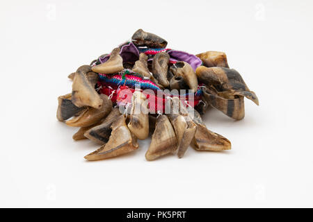 Chulus or Chajchas, Single Goat Toenail Rattle attached to a material band - Stock Image