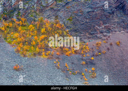 Autumn colored trees in rocky mountain landscape - Stock Image