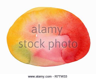 Watercolor painting of ripe mango - Stock Image