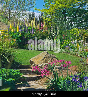 A garden scene with flowering border of Lupins - Stock Image
