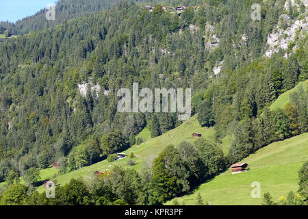 The slopes of the hillsides. There are huts, chalets and houses that are on meadows and hidden in a forest and this - Stock Image