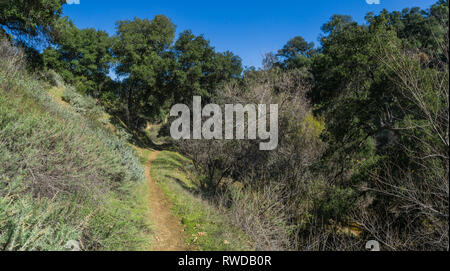 Walking trail borders on the side of a wooded canyon ledge. - Stock Image