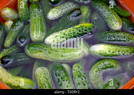 A lot of fresh cucumbers in clear water background - Stock Image