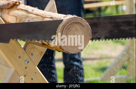 2 man cut  a tree with a saw - Sawdust is flying around. Selective focus - Stock Image