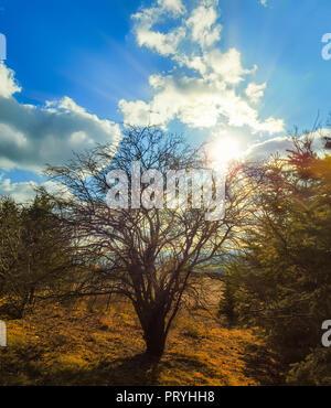 Bald tree - Stock Image