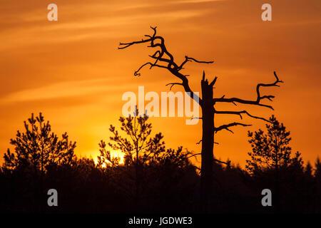 Sunrise in the moor, Sonnenaufgang im Moor - Stock Image