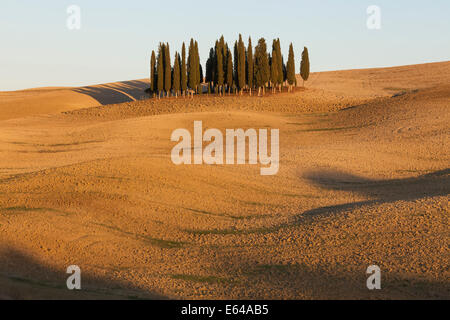 Tuscan Cypress Trees near San Quirico d'Orcia, in the Val d'Orcia, Tuscany, Italy. - Stock Image