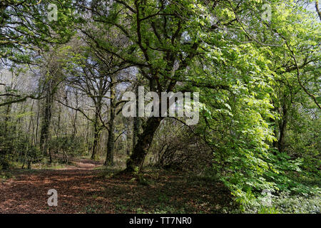 Image of a  landscape of fresh forest going back to life after winter season. - Stock Image
