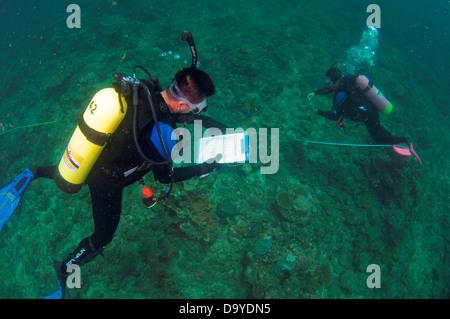 Fisheries conducting a reef management and biodiversity analysis, Brunei - Stock Image