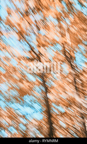 Abstract background made of motion blurred trees, color toning applied. - Stock Image