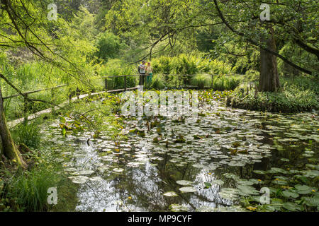 A couple looking at the lake or lily pond within the Botanical Garden of Lucca, Tuscany, Italy, Europe - Stock Image