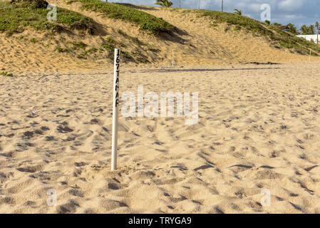 Seaturtle net under the sand of the beach at Sauipe on Brazil - Stock Image