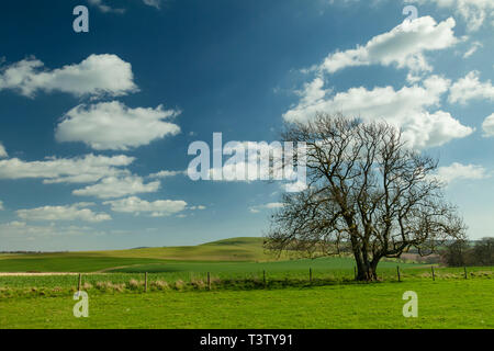 Early spring in South Downs National Park, West Sussex, England. - Stock Image