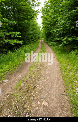 A gravel and dirt logging road in the Adirondack wilderness, NY USA - Stock Image