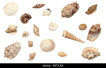 beautiful collection of different types of shells, isolated on white background - Stock Image
