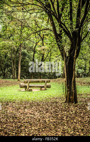 tree and wooden bench - Stock Image