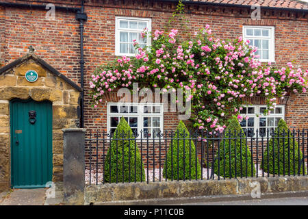 Porch House erected 1580 is the oldest private house in Northallerton with a fine rambling rose covering the front wall - Stock Image