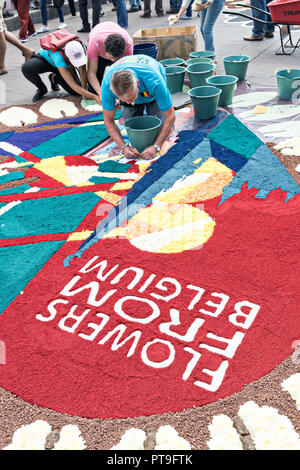 A member of Team Belgium creates a floral carpet made from colored sawdust and decorated with flowers during the 8th Night Celebration marking the end of the Feast of St Michael in the central Mexican town of Uriangato, Guanajuato. Every year the town decorates 5km of road with religious icons in preparation for the statue of the patron saint to be paraded through the town. Uriangato became an international sensation after wowing Brussels with their floral carpet displayed at the Brussels Grand-Place during the Belgium Floral Carpet festival. - Stock Image