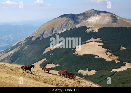 Horse running  on the mountain - Stock Image
