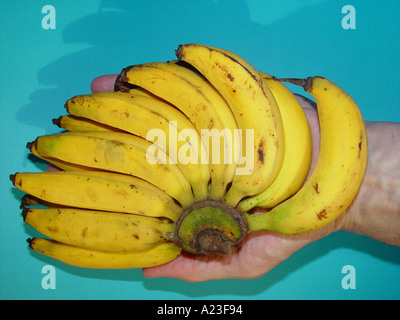 A hand of bananas with hand - Stock Image