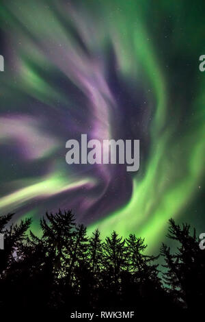Green and purple northern lights overhead, Tongass National Forest, Southeast Alaska; Alaska, United States of America - Stock Image