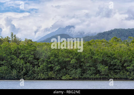 Scenic view of World Heritage Site Daintree National Park with low clouds over the tropical rainforest, Wet Tropics, Far North Queensland, FNQ, QLD, A - Stock Image