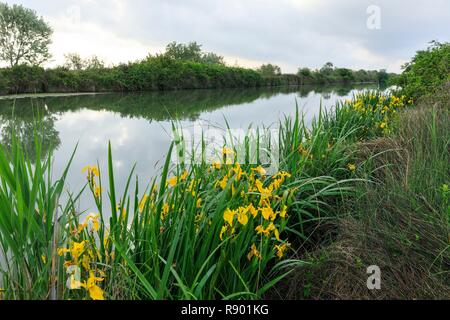 France, Bouches du Rhone, Camargue Regional Nature Park, Arles, Arles to Bouc canal - Stock Image