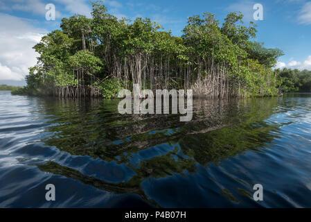 Mangrove island on Hells Bay canoe trail, Everglades National Park, Miami, Florida, USA - Stock Image