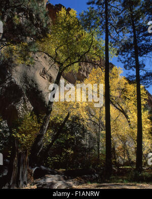 Bandelier Nat Monument - Stock Image