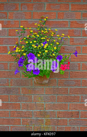 A colourful wall hanging container with yellow, purple and red flowers on a red brick bckground - Stock Image