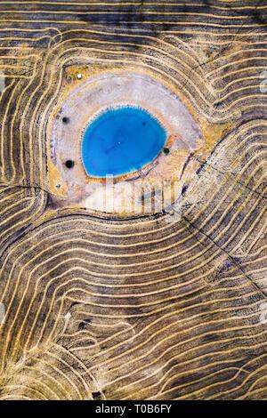 Wheat field in Western Australia - Stock Image