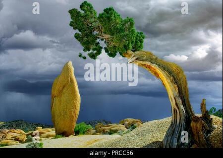 Rock pinnacle and thunderstorm framed by juniper tree. Joshua Tree National Park, California - Stock Image