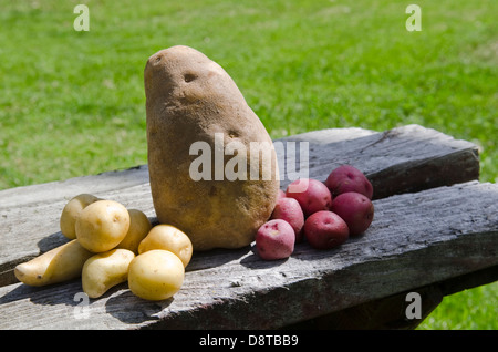 various size potatoes - Stock Image