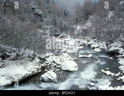 Pitiao River, Wolong Natural Reserve, Sichuan, China, after an overnight snowfall is a giant panda habitat. - Stock Image