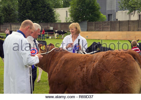 Winners receive their rosettes from a judge at the East Kilbride Open Cattle show. - Stock Image