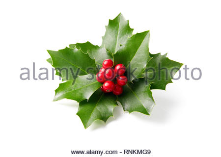 Holly leaves decoration with red berries on white background. - Stock Image
