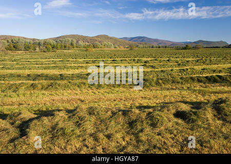 A hay field in Maidstone, Vermont. - Stock Image
